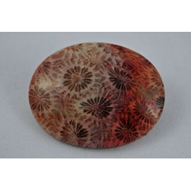 Coral (fossilized)