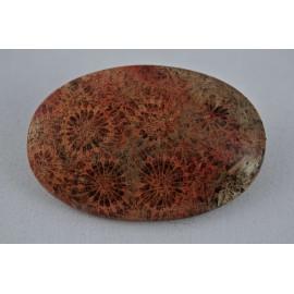 Corallo Fossile