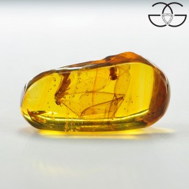 Winged termites in dominican amber