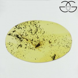 Coleoptera in dominican amber