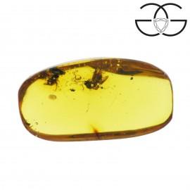 Formiche alate in ambra dominicana